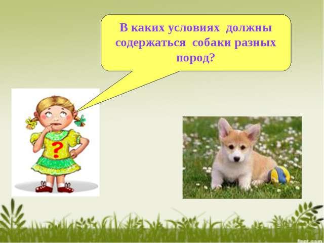 В каких условиях должны содержаться собаки разных пород?