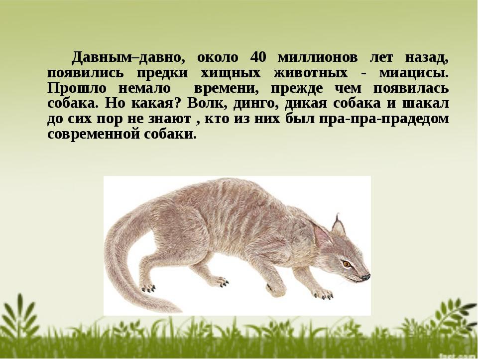 Давным–давно, около 40 миллионов лет назад, появились предки хищных животных...
