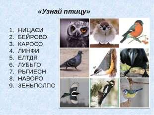 «Узнай птицу» НИЦАСИ БЕЙРОВО КАРОСО ЛИНФИ ЕЛТДЯ ЛУБЬГО РЬГИЕСН НАВОРО ЗЕНЬПОЛПО
