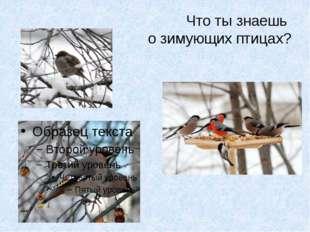 Что ты знаешь о зимующих птицах?