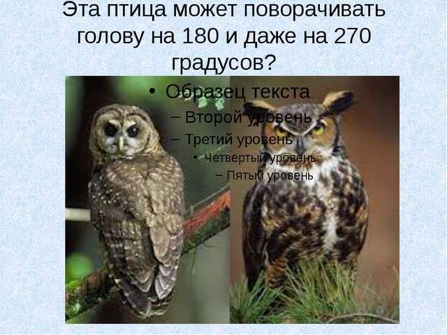 Эта птица может поворачивать голову на 180 и даже на 270 градусов?