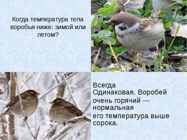 Когда температура тела воробья ниже: зимой или летом? Всегда Одинаковая.Воро...