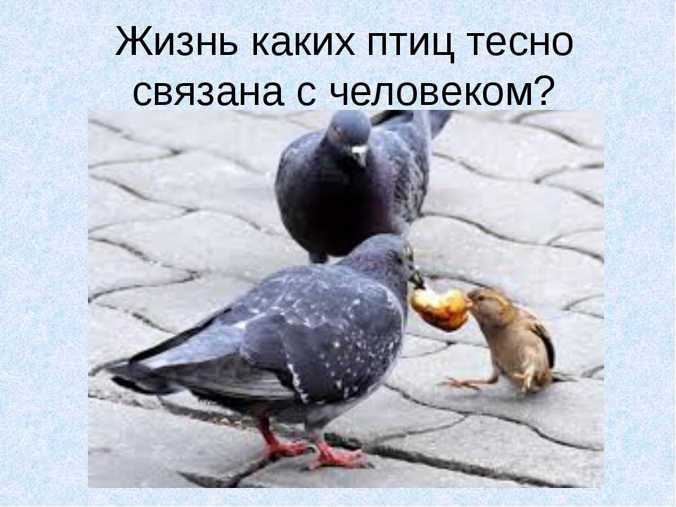 Жизнь каких птиц тесно связана с человеком?