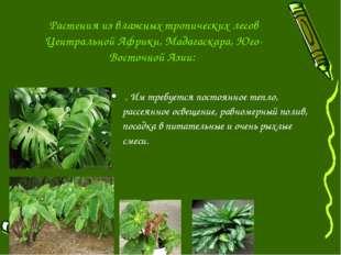 Растения из влажных тропических лесов Центральной Африки, Мадагаскара, Юго-Во