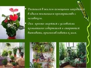 Растения в жилом помещении находятся в одном жизненном пространстве с человек