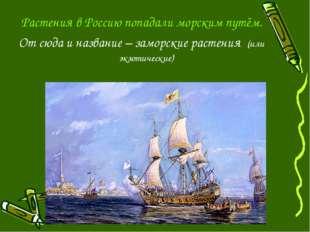 Растения в Россию попадали морским путём. От сюда и название – заморские раст