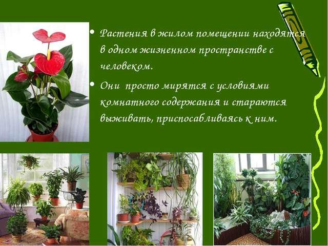 Растения в жилом помещении находятся в одном жизненном пространстве с человек...