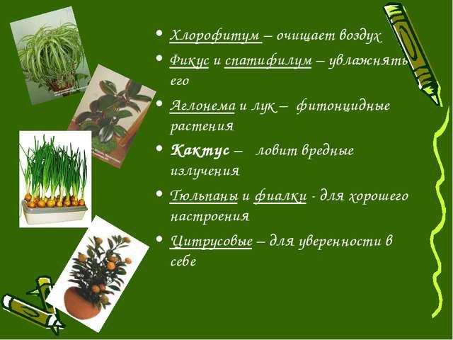 Хлорофитум – очищает воздух Фикус и спатифилум – увлажнять его Аглонема и лук...