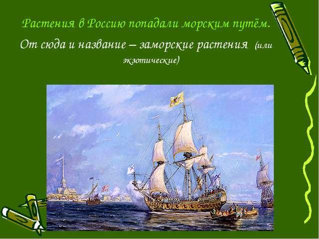 Растения в Россию попадали морским путём. От сюда и название – заморские раст...