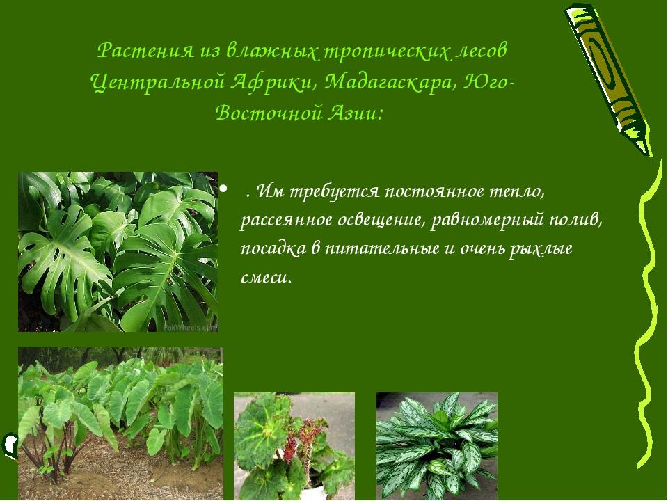 Растения из влажных тропических лесов Центральной Африки, Мадагаскара, Юго-Во...