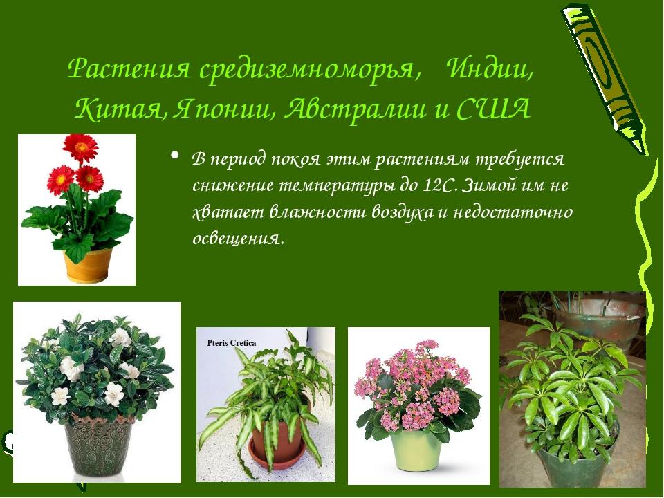 Растения средиземноморья, Индии, Китая, Японии, Австралии и США В период поко...