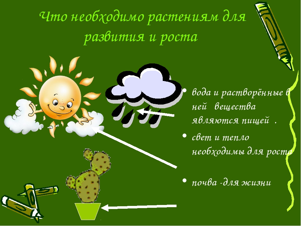 Что необходимо растениям для развития и роста вода и растворённые в ней веще...