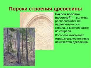 Пороки строения древесины Наклон волокон (косослой) — волокна располагаются н