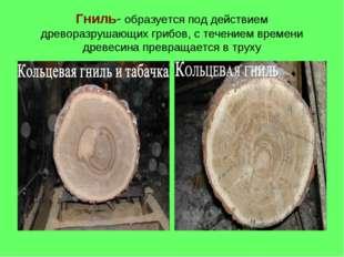 Гниль- образуется под действием древоразрушающих грибов, с течением времени д