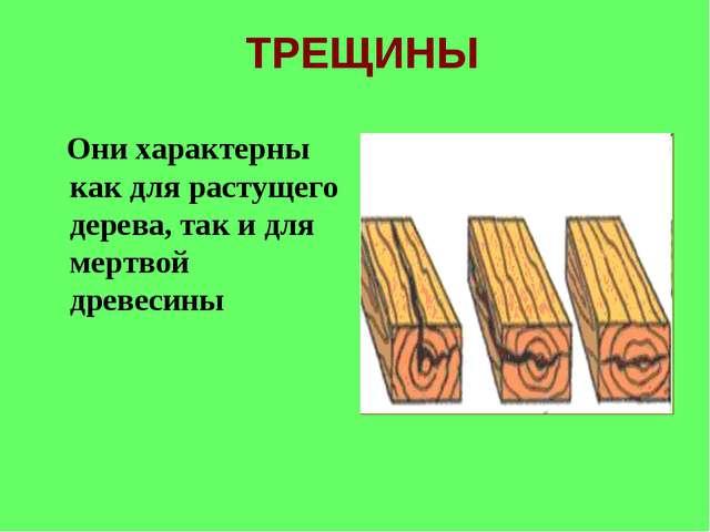 ТРЕЩИНЫ Они характерны как для растущего дерева, так и для мертвой древесины