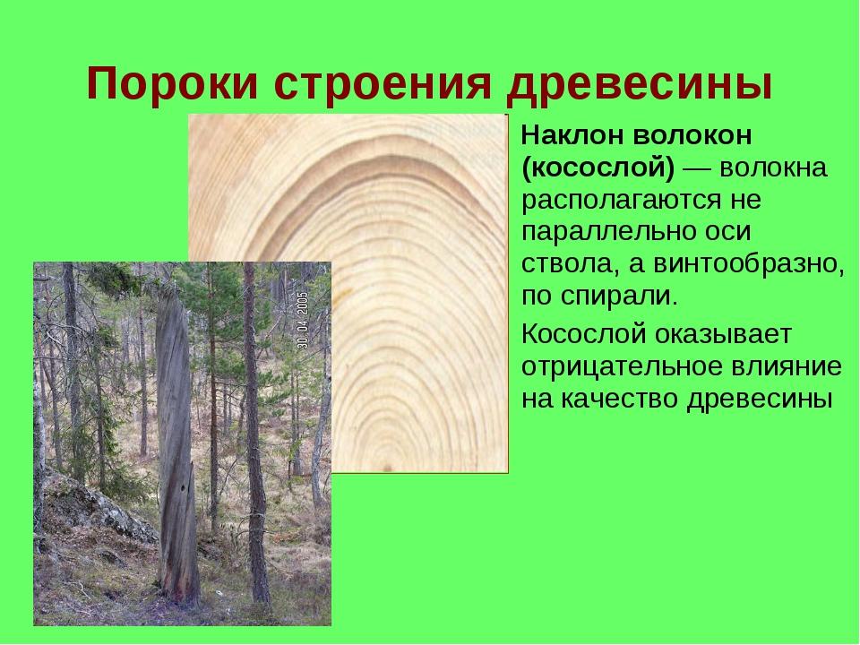 Пороки строения древесины Наклон волокон (косослой) — волокна располагаются н...