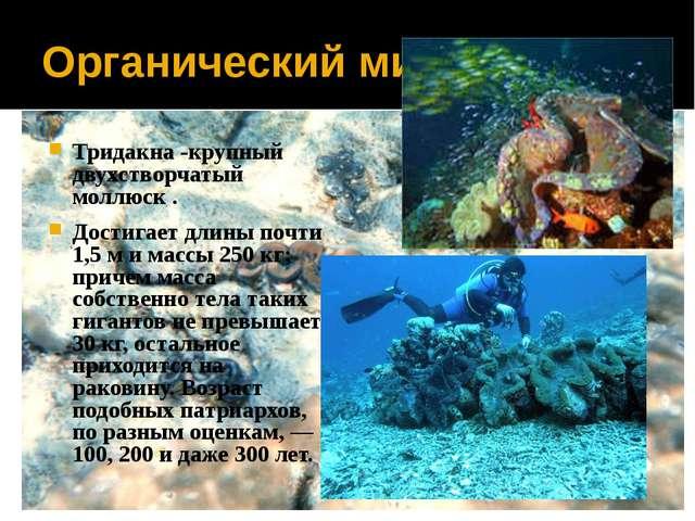 Органический мир Тридакна -крупный двухстворчатый моллюск . Достигает длины п...