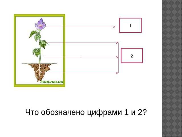 1 2 Что обозначено цифрами 1 и 2?