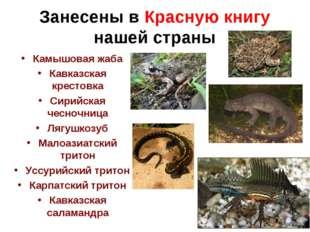 Занесены в Красную книгу нашей страны Камышовая жаба Кавказская крестовка Сир