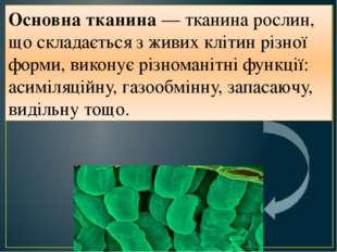 Основна тканина — тканина рослин, що складається з живих клітин різної форми,