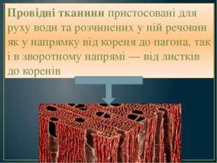 Провідні тканини пристосовані для руху води та розчинених у ній речовин як у
