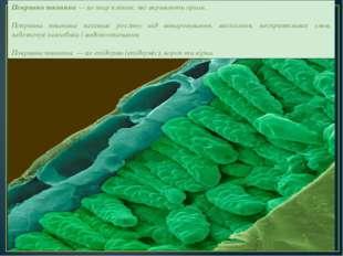 Покривна тканина — це шар клітин, які вкривають орган. Покривна тканина захищ