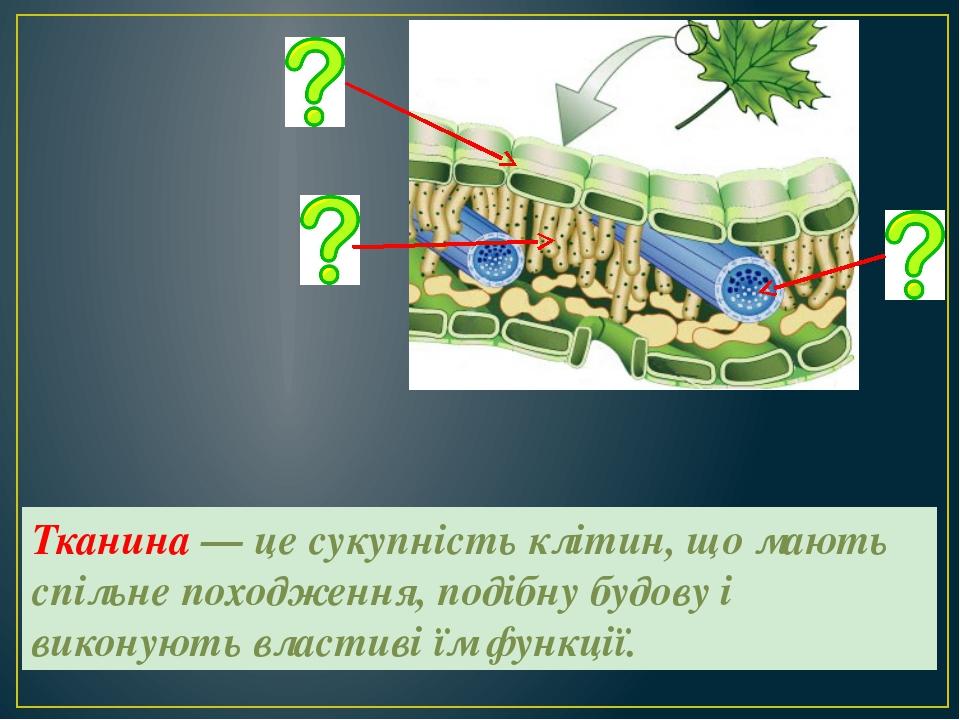 Тканина — це сукупність клітин, що мають спільне походження, подібну будову і...