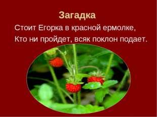 Загадка Стоит Егорка в красной ермолке, Кто ни пройдет, всяк поклон подает.