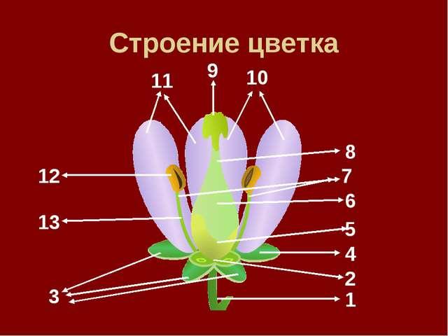 Строение цветка 9