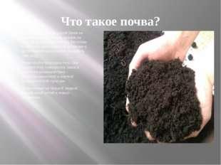 Что такое почва? Если бы поверхность нашей Земли не была бы покрыта почвой, ч