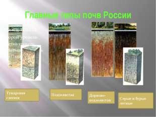 Главные типы почв России Тундровая глеевая Подзолистая Дерново-подзолистая Се