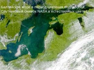 Балт. регион Балтийское море в период цветения водорослей. Спутниковый снимок