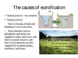 The causes of eutrofication Natural process – for centuries Human activity: -