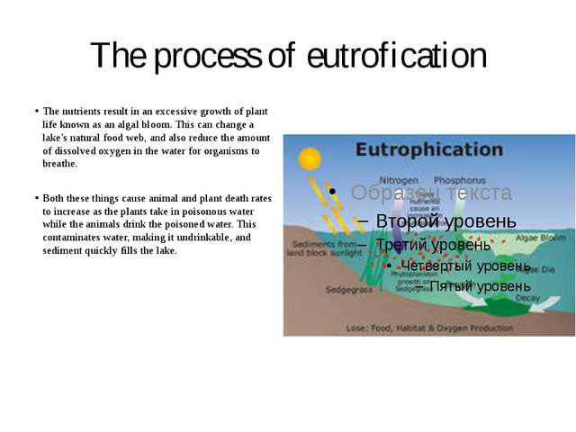 The process of eutrofication The nutrients result in an excessive growth of p...