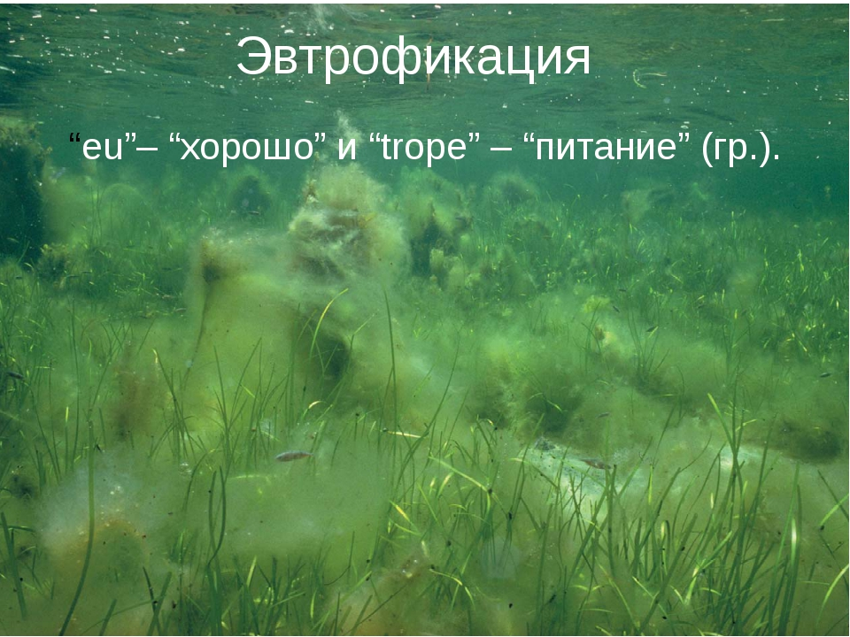 "Эвтрофикация ""eu""– ""хорошо"" и ""trope"" – ""питание"" (гр.)."