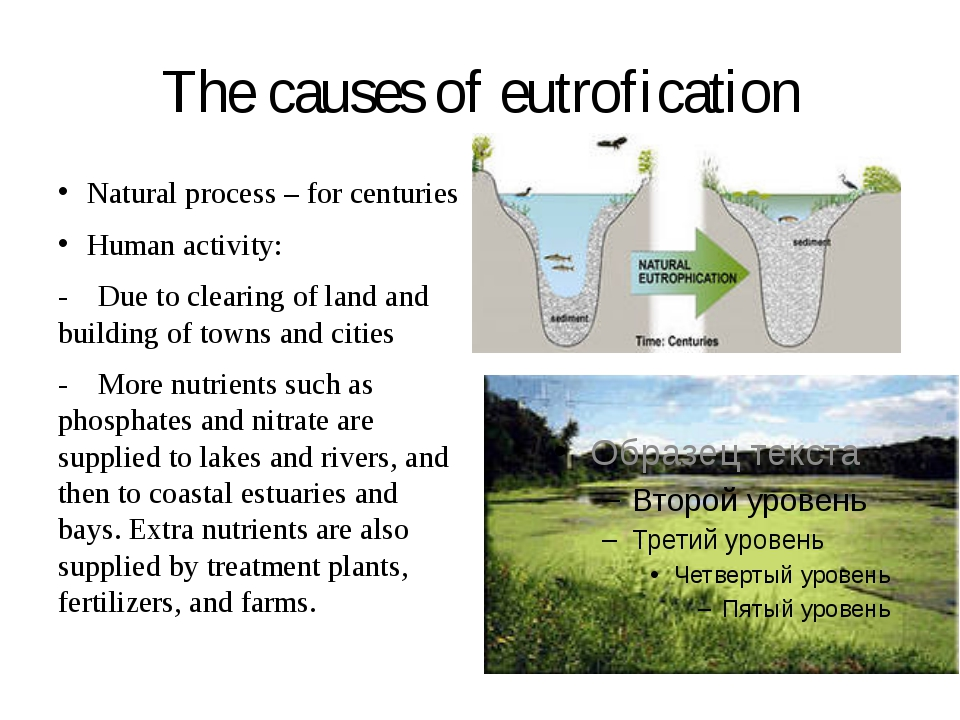 The causes of eutrofication Natural process – for centuries Human activity: -...