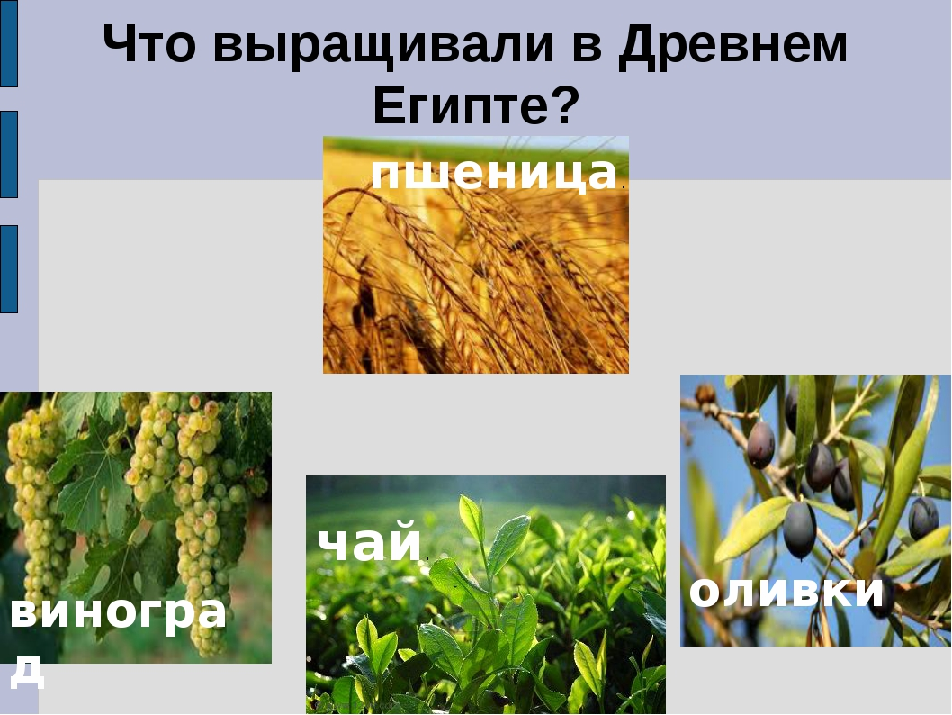 что выращивают