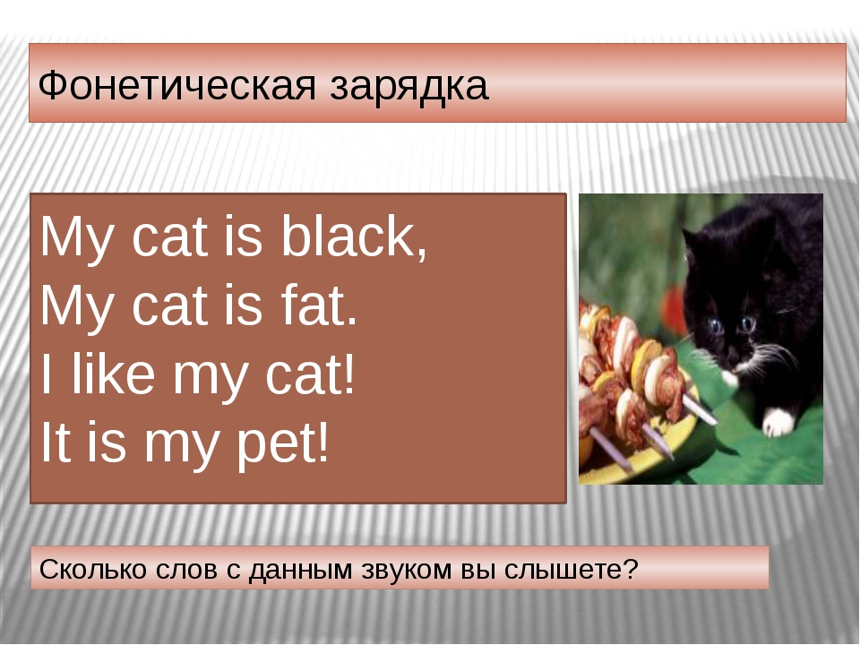 Фонетическая зарядка Сколько слов с данным звуком вы слышете? My cat is black...