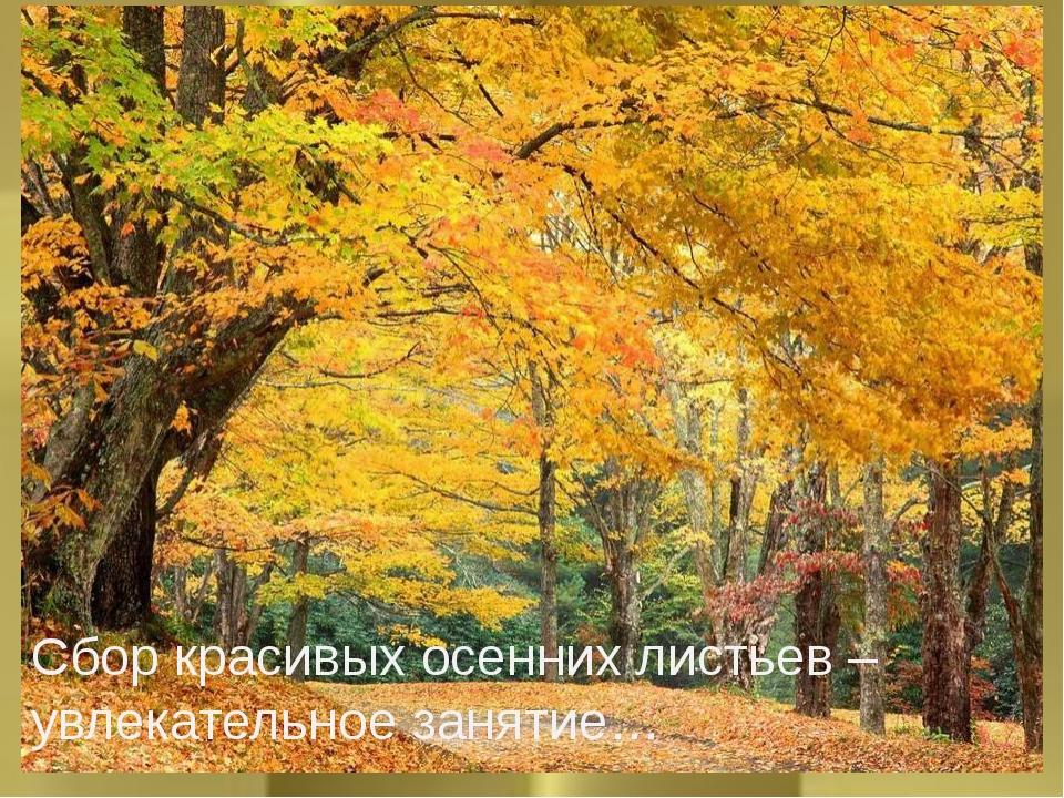 Аппликация из листьев Сбор красивых осенних листьев –увлекательное занятие…