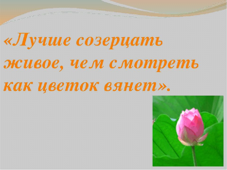 «Лучше созерцать живое, чем смотреть как цветок вянет».