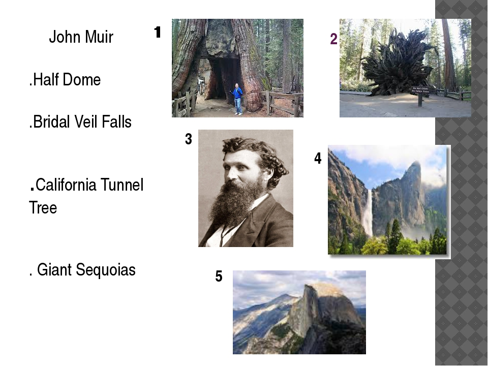 2 John Muir .Half Dome .Bridal Veil Falls .California Tunnel Tree . Giant Seq...
