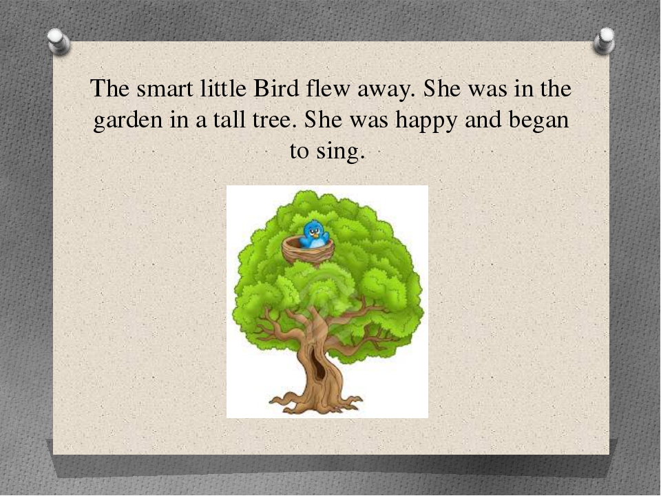 The smart little Bird flew away. She was in the garden in a tall tree. She wa...