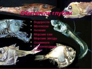 Обитатели глубин Водоросли Моллюски Актинии Морские ежи Морские звезды Осьмин