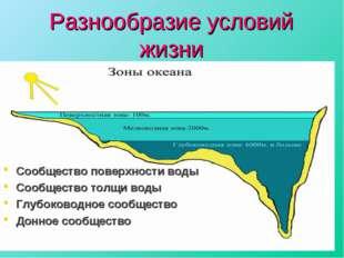 Разнообразие условий жизни Сообщество поверхности воды Сообщество толщи воды