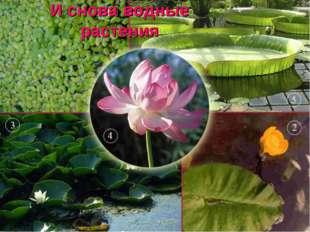 И снова водные растения