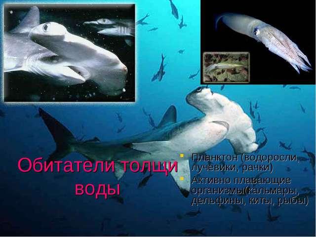 Обитатели толщи воды Планктон (водоросли, лучевики, рачки) Активно плавающие...