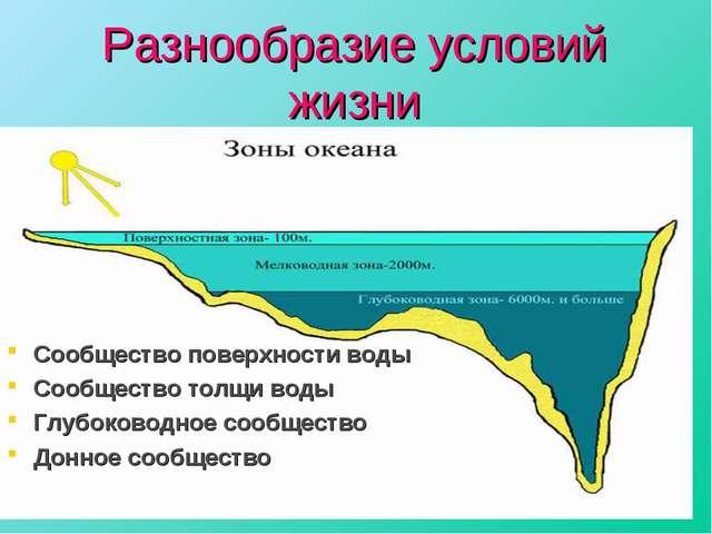 Разнообразие условий жизни Сообщество поверхности воды Сообщество толщи воды...