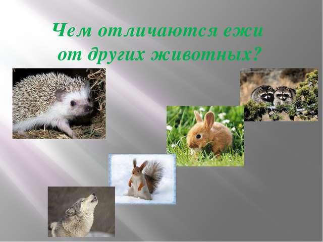 Чем отличаются ежи от других животных?