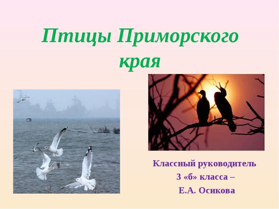 Птицы Приморского края Классный руководитель 3 «б» класса – Е.А. Осикова