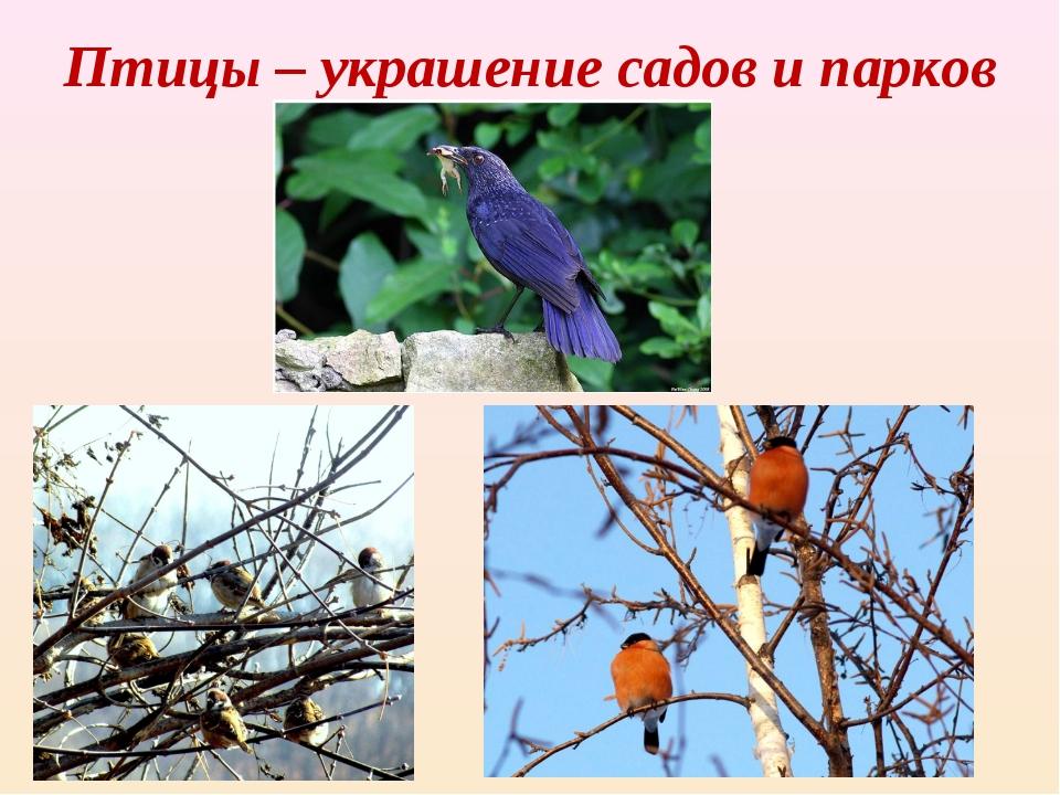 Птицы – украшение садов и парков